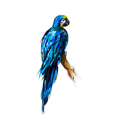 Vector color line drawing a parrot