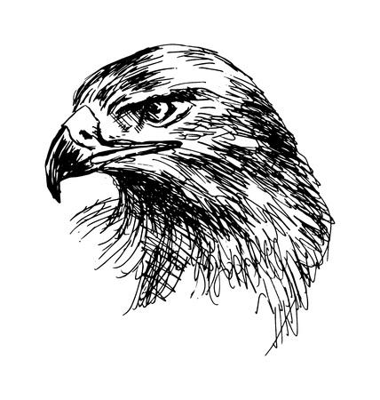 Hand schets arend hoofd. Vector illustratie