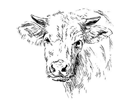 Hand schets hoofd koe. Stock Illustratie