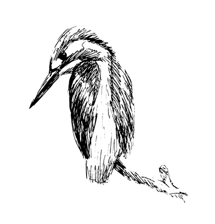 Hand sketch of kingfisher. Vectores