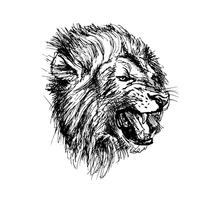 Hand Sketch Lion Head.