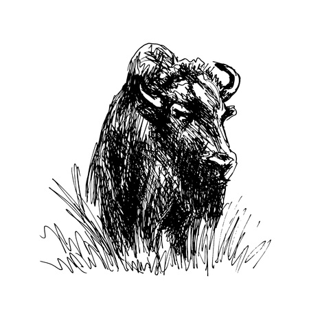 Hand sketch bison. Vector illustration 向量圖像