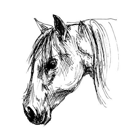Hand sketch head horse. Vector illustration