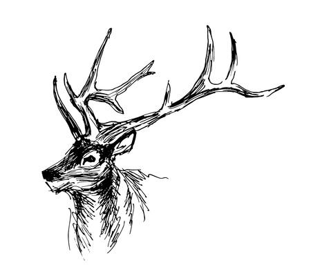 손 스케치 머리 사슴입니다. 벡터 일러스트 레이 션 일러스트