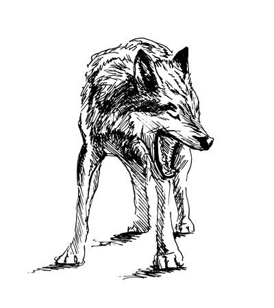 손으로 스케치 늑대입니다. 벡터 일러스트 레이 션 일러스트