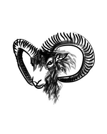 Vector ink sketch head of a mouflon
