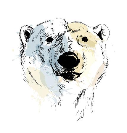 북극곰의 컬러 손 스케치 머리입니다.