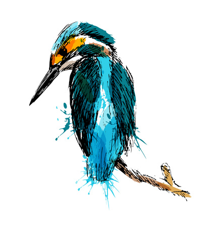 Colored hand sketch of kingfisher vector illustration.