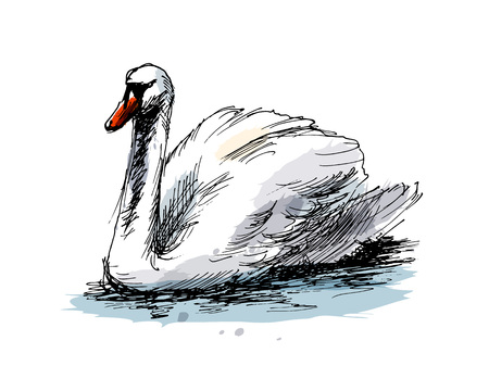 Colored hand sketch swan.