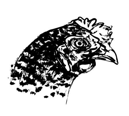 手ブラシ スケッチ鶏の頭部イラスト。  イラスト・ベクター素材