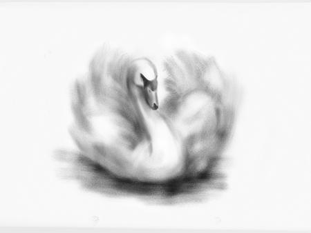 白鳥を手描き。デジタルイラストレーション