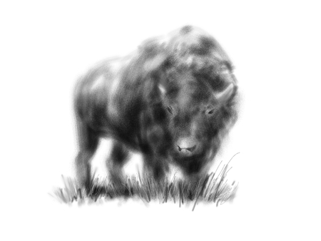 Hand drawing bison. Digital illustration