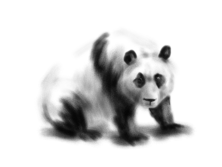 Hand drawing a panda. Digital illustration