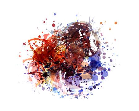 vector color illustration lion Illustration