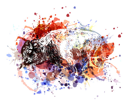 Vector color illustration bison