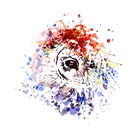 Vector color illustration head owl Stock Illustratie