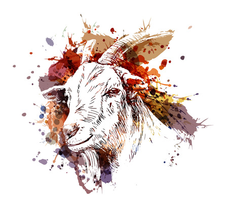 Vector color illustration head of goat