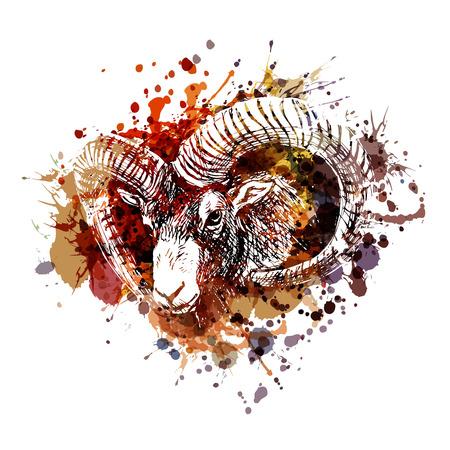 vecteur couleur illustration tête de coq
