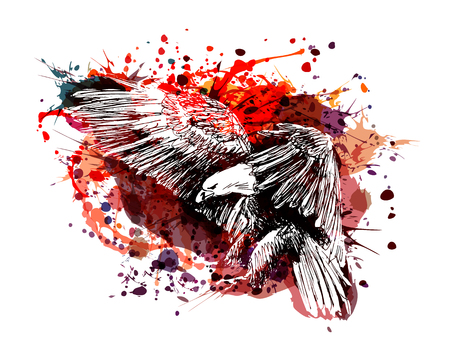 Vector color illustration of a flying eagle 일러스트