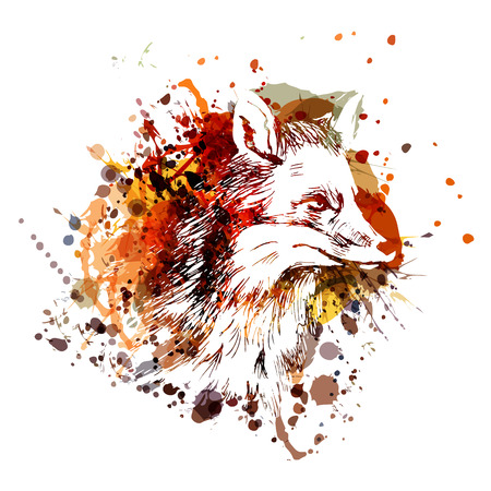 Vector color illustration fox head Ilustração