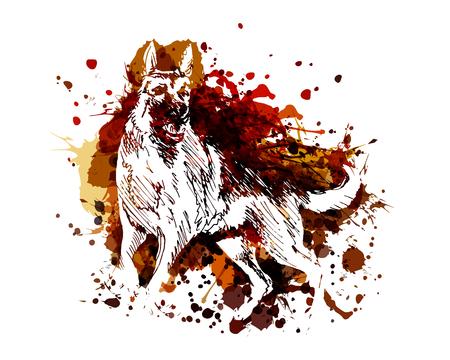 Vector color illustration of a German Shepherd
