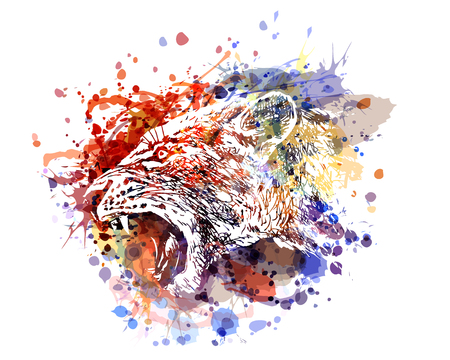 A Vector color illustration of a lioness head