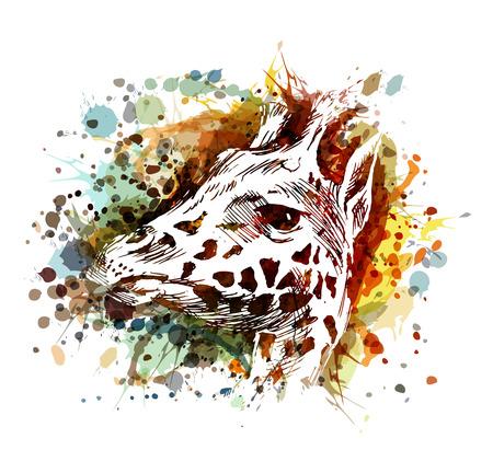 Vector color illustration of a giraffe head