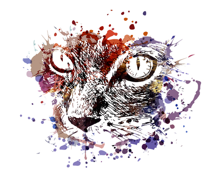 Vector color illustration of cat face Vettoriali