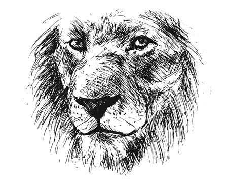 Lions head illustration