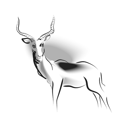Vector sketch of antelope Çizim