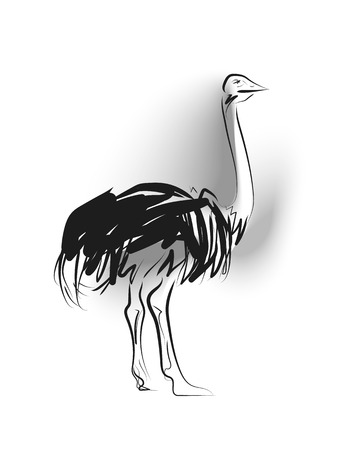 Vector sketch of ostrich