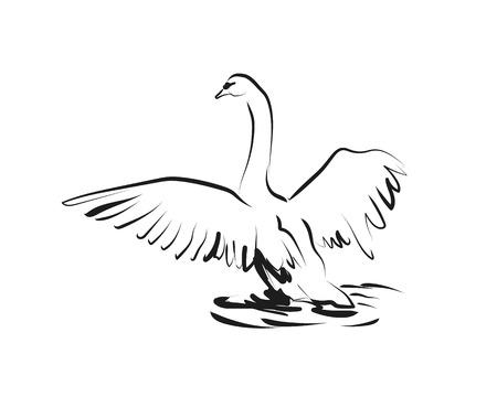Vector schets van zwaan
