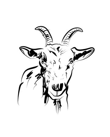 Dibujo vectorial de cabeza de cabra Ilustración de vector