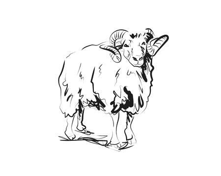 Dibujo vectorial de ram