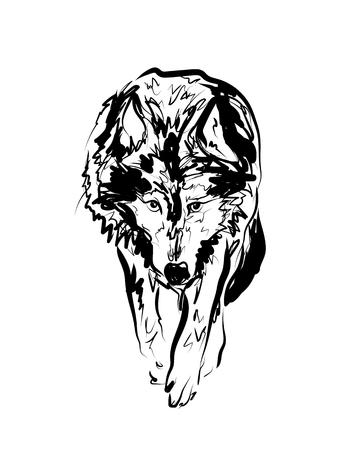 Vector sketch walking wolf