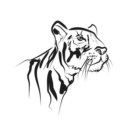 Vector sketch head tiger