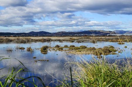 Moor marsh, marsh near Sagunto, Valencia, Spain Stock Photo