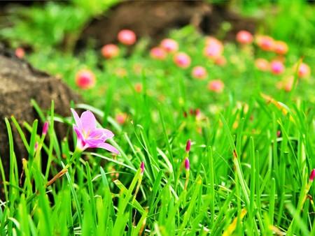 sch�ne blumen: Beautiful flowers in the garden Lizenzfreie Bilder