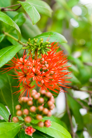 flower is a species of plants that are native to Africa.