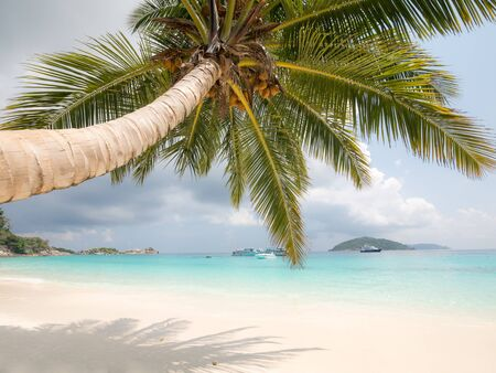Beautiful beach view from under coconut tree