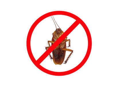 Stop the spread of germs from cockroaches.Cockroaches are carriers of disease. There are bacteria that cause plague disease, dysentery, diarrhea,Food poisoning And typhoid.Health care concept.