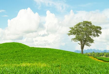 landscape of Green Pineapple plantations on beautiful hillsblue sky and cloud with natural background. Banque d'images