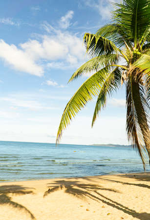 Tropical vacation paradise with white sandy beaches Coconut palm tree leaf with beautiful tropical beach and sea on blue sky background