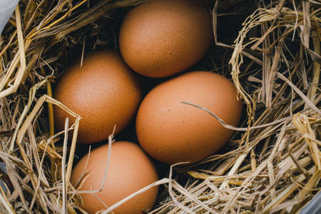 Chicken eggs on a nest of grass for incubationมNatural organic homemade products. Фото со стока