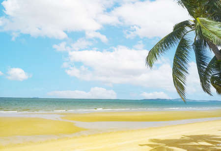 Tropical beach with coconut tree , copyspace for text. Concept of summer relaxation