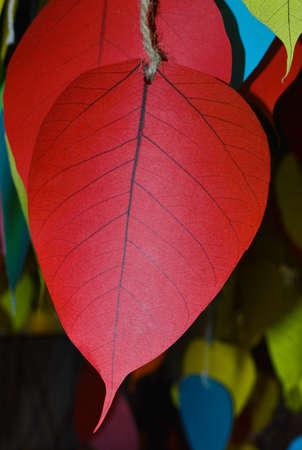 peepal: Colorful bodhi leaf for Write a prayer in Vesak Festival, Thailand Stock Photo