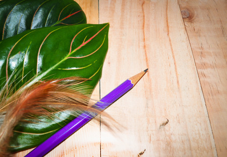 color pencils: Nature concept. Green leaves and pencil on white background Stock Photo