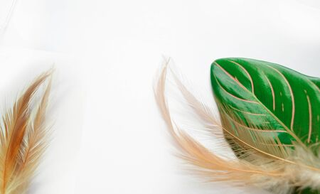 geen: Feather and  geen leaves on white backgroun Stock Photo