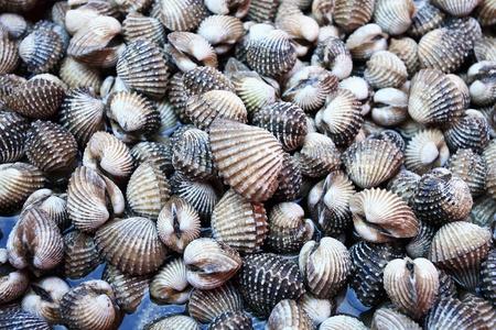 cockleshells: animals, aquatic,clam;cockle; cockleshells, sea; seafood; seashell;