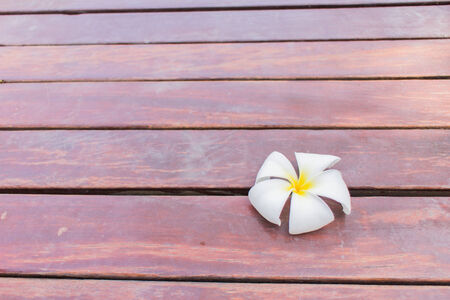 sift: Plumeria flower on a background that is sift wood